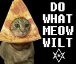 Do What Meow Wilt